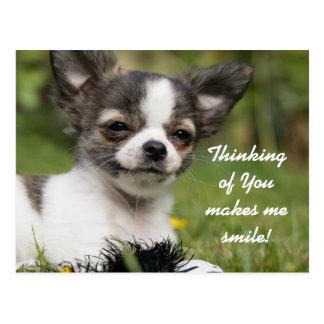 Pensamiento en usted chihuahua postal