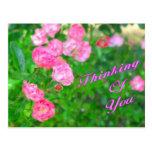 Pensamiento en usted flores del rosa postales
