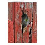 Pensamiento en usted gato tarjeta de felicitación