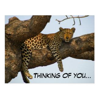 Pensamiento en usted (leopardo en un árbol) postal