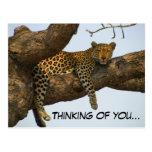 Pensamiento en usted (leopardo en un árbol) tarjeta postal