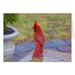 Pensamiento en usted - PAL secreto - cardenal rojo Felicitación