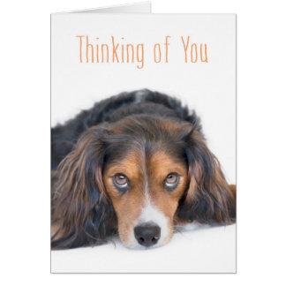 Pensamiento en usted - perro hermoso con los ojos tarjetas