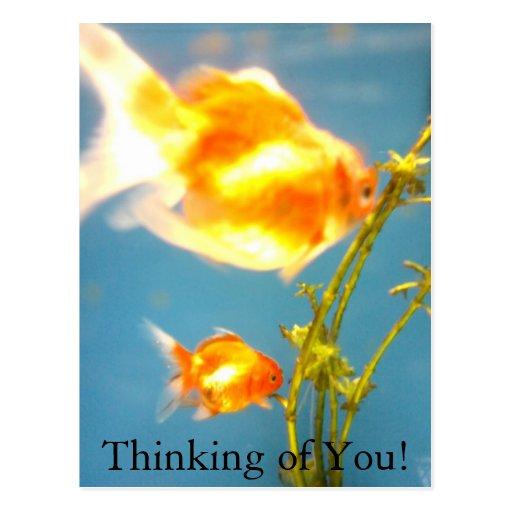 ¡Pensamiento en usted! Postales