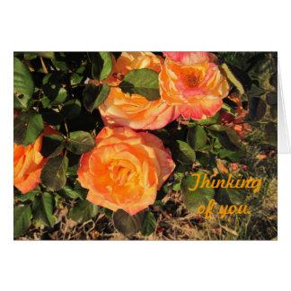 Pensamiento en usted: Rosas coralinos Tarjeta De Felicitación