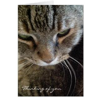 Pensamiento en usted tarjeta divertida del gato de