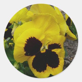 Pensamiento mezclado amarillo etiquetas redondas