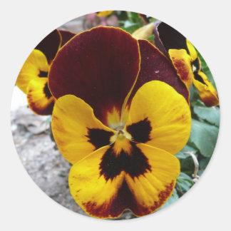 Pensamiento mezclado amarillo pegatinas redondas