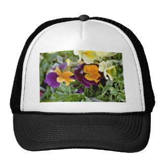 Pensamiento púrpura con las flores de centro anara gorra