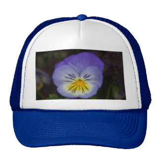 Pensamiento púrpura gorras