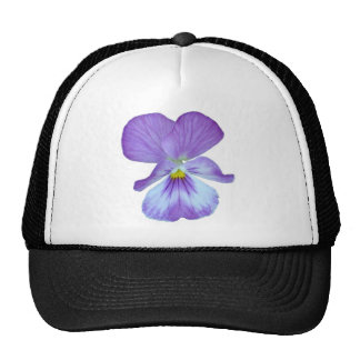 Pensamiento púrpura gorra