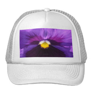 pensamiento púrpura púrpura b6 gorra