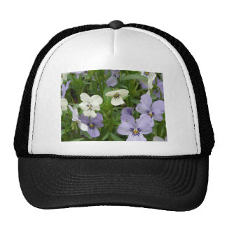 pensamiento púrpura y blanco gorra