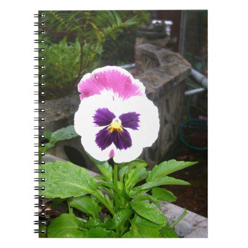 Pensamiento púrpura y blanco solitario libretas espirales