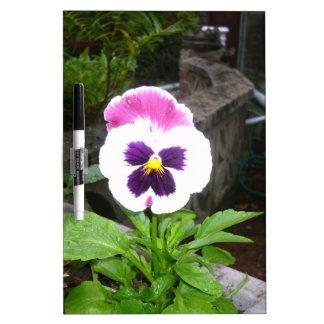 Pensamiento púrpura y blanco solitario tablero blanco