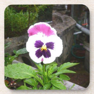 Pensamiento púrpura y blanco solitario posavasos