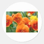 Pensamientos anaranjados pegatina redonda