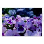 ¡Pensamientos azules y púrpuras! Felicitaciones
