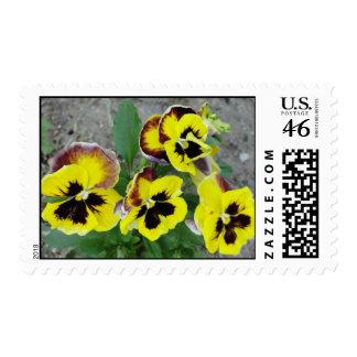 Pensamientos en sellos postales de la floración