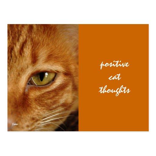 pensamientos positivos del gato tarjetas postales