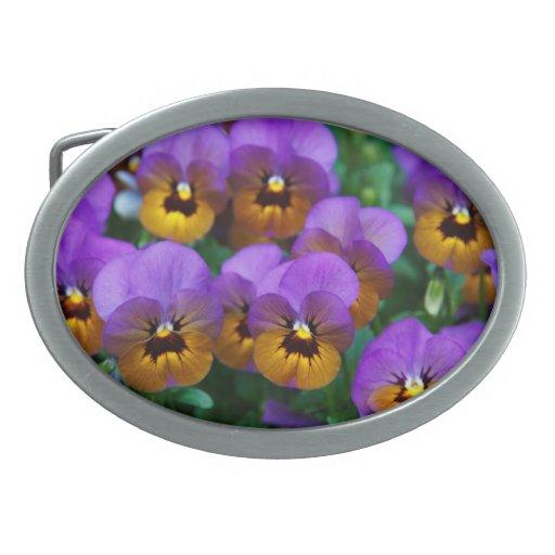 Pensamientos púrpuras bonitos en un campo hebilla de cinturon