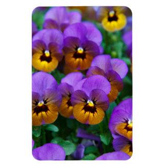 Pensamientos púrpuras bonitos en un campo iman
