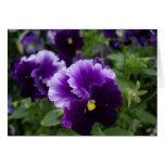 Pensamientos púrpuras felicitación