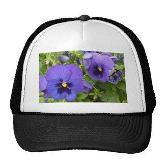 Pensamientos púrpuras gorras