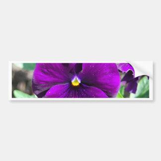 Pensamientos púrpuras pegatina de parachoque