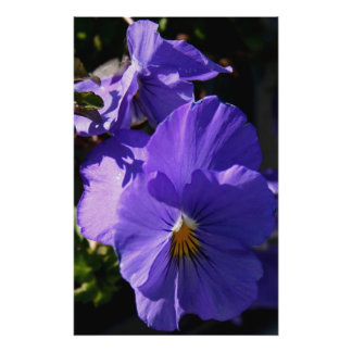 Pensamientos púrpuras impresión fotográfica