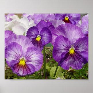 Pensamientos púrpuras póster