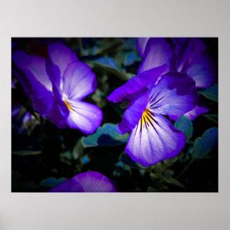 Pensamientos púrpuras vibrantes póster