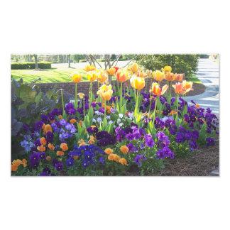 Pensamientos y tulipanes impresión fotográfica