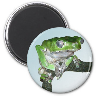 Pensive giant waxy monkey tree frog 2 inch round magnet