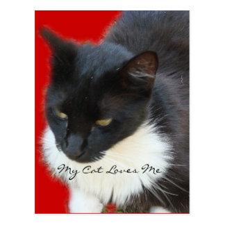 Pensive Kitty Postcard