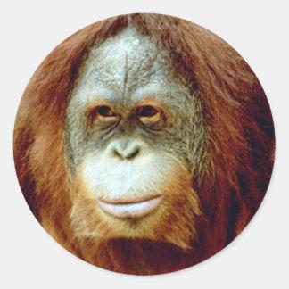 Pensive Orangutan Face Round Stickers