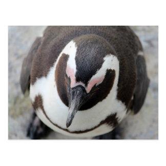 Pensive penguin postcard