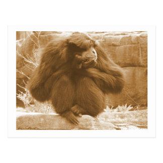 Pensive Primate Postcard