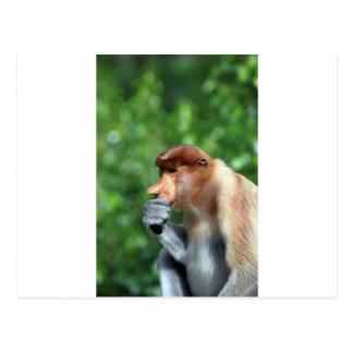 Pensive proboscis monkey postcard