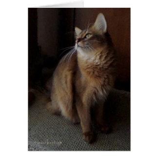 Pensive Somali Cat Digital Oil Card