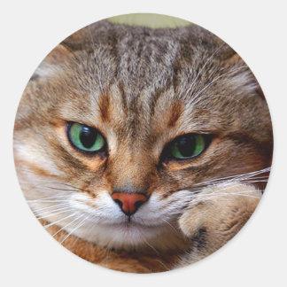 pensive tiger cat classic round sticker