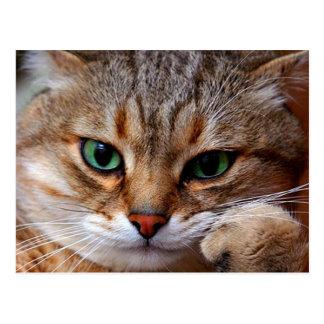 pensive tiger cat postcard