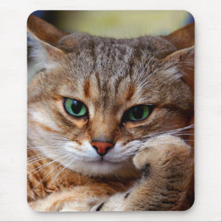 Pensive tiger cat with beautiful green eyes mouse pad