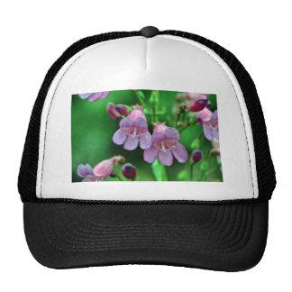 Penstemon flowers mesh hats
