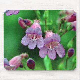 Penstemon flowers mouse pad