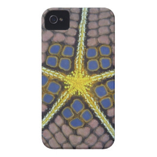 Pentagon of a Sea star iPhone 4 Cover