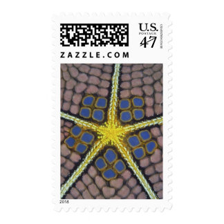Pentagon of a Sea star Postage
