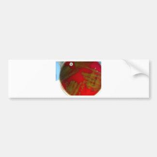 Penumonia Bacteria Bumper Sticker