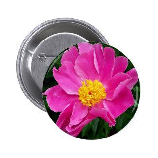 Peoney rosado bonito pin