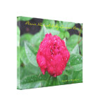 Peonie After Rain Wrapped Canvas Stretched Canvas Prints